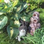 Вислоухие котята, Новосибирск