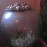 Продам круглый аквариум б/у в отличном состоянии на 15 л воды, Новосибирск