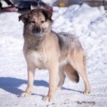 Доброй собаке очень нужен дом!, Новосибирск