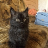 Чёрный котёнок к белой полосе жизни, Новосибирск