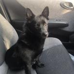 Найдена собака! На улице 2-ая Станционнаяя!, Новосибирск