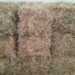 Продам сено, солому в брикетах., Новосибирск