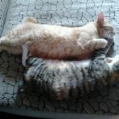 Отдам в хорошие руки кота и кошку, Новосибирск