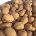 Картофель оптом, Новосибирск
