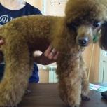 Стрижка собак, Новосибирск