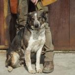 Собака Берта в добрые руки, Новосибирск