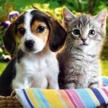 Зоогостиница для животных для кошек и собак, Новосибирск