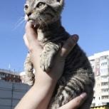 Котенок корниш-рекс в добрые руки, Новосибирск