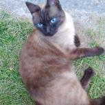 Помогите, пожалуйста! Потерялся кот!, Новосибирск