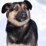 В районе 2 Экскаваторного переулка потерялась собака, Новосибирск