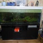 Продам аквариум 500 литров Б/У, Новосибирск