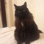 Потерялась кошка Кира, Новосибирск