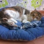 Кошечка Катюша в поисках нового дома, Новосибирск