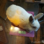Крольчата 2.5 месяца, Новосибирск