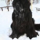 Потерялась собака!, Новосибирск