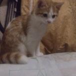 Найден котенок, мальчик, на Станиславском ж/м, Новосибирск