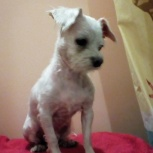 Найдена собачка, Новосибирск
