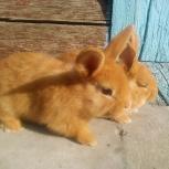 Крольчата нзк, Новосибирск