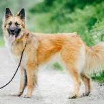 Чудесная собака Аделина в добрые руки, Новосибирск