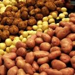 Картофель сетками с бесплатной доставкой на дом, Новосибирск