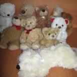 Милое семейство 10 медведей, Новосибирск