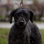 Тоша ищет дом, отдам собаку, Новосибирск