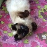 Кошечка Марта ищет дом, Новосибирск