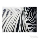 Картина зебра, Новосибирск