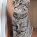Молоденькая кошечка Эля в поисках дома, Новосибирск