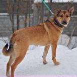Супер собачка Руби, Новосибирск