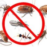 Уничтожение всех видов насекомых, Новосибирск