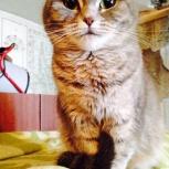 Кошка Соня в добрые руки, Новосибирск