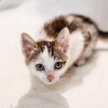 Котята девочки, возраст 2-4 месяца, Новосибирск