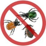 Уничтожение насекомых, Новосибирск