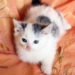 Нежные и трепетные малютки-котятки ждут ваших ручек!, Новосибирск