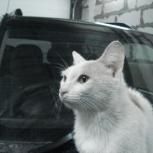 Найдена кошечка, очень нуждается в тепле и ласке новых хозяев, Новосибирск