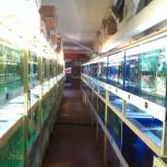 Огромный выбор аквариумных рыб, Новосибирск