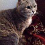 Кошка Маруся, Новосибирск