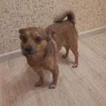 Найден пёс, Новосибирск