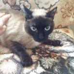 Отдам кота в добрые руки, Новосибирск