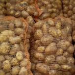 Картофель, Новосибирск