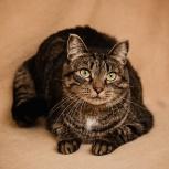 Очаровательная кошка Джессика в поисках семьи, Новосибирск