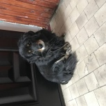 Нашли собаку, Новосибирск
