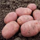 Картофель с доставкой, Новосибирск