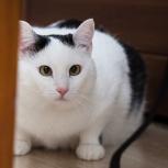 Отдам большого кота, Новосибирск