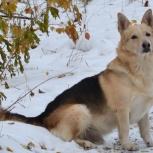 Пропал пес!, Новосибирск