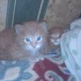 Кот с повадками собаки. Преданный друг будет, Новосибирск