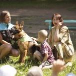 Консультация по воспитанию собаки, Новосибирск