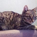 Найден котёнок, Новосибирск