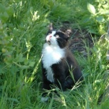 Котик (3 мес) ищет добрую семью, Новосибирск